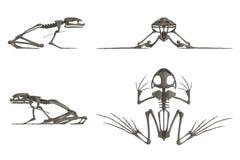 Rinda del esqueleto de la rana Imagenes de archivo