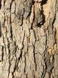 Rinde des Baums Stockbilder