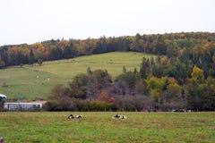 Rinderfarm in Sussex stockbilder