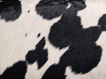 Rindlederhaarkuh-Haut-Schwarzweiss-Hintergrund Lizenzfreie Stockfotos