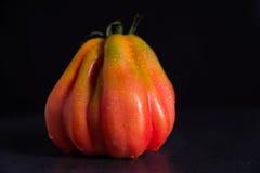 Rinforzi il pomodoro su un fondo nero con le goccioline immagine stock libera da diritti