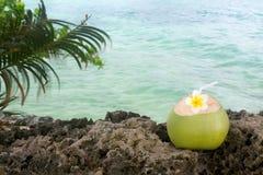 Rinfresco tropicale della noce di cocco fotografia stock