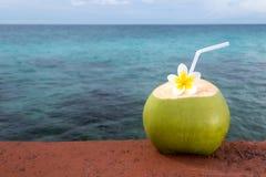 Rinfresco tropicale della noce di cocco fotografia stock libera da diritti