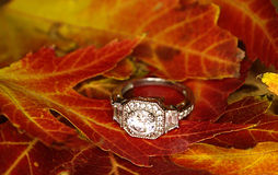 ring Lizenzfreies Stockfoto