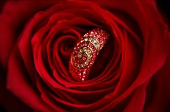 Ring with diamonds in a red Rose Royalty Free Stock Photos