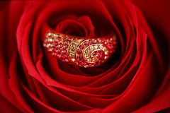 Ring with diamonds in a Rose Stock Photography
