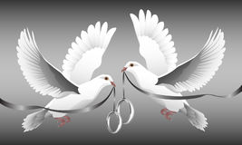 Ring Doves Stock Photos
