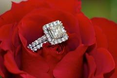 Ring in een bloem Stock Foto