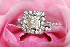 Ring in een bloem Royalty-vrije Stock Fotografie
