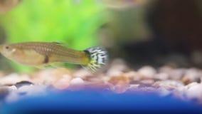 Ring en een aquarium stock video
