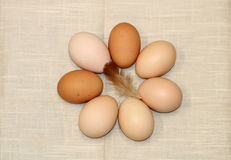 A Ring of Farm Fresh Eggs. Farm fresh brown chicken eggs form a ring or circle around a small, fluffy chicken feather. Arranged on a beige textured napkin stock photography