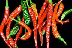 Ring of Fire Chillies. One of the varieties of the chillies Royalty Free Stock Images