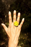 Ring flower Royalty Free Stock Photography