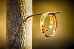 Ring geschossen auf dem Zweig Lizenzfreies Stockbild