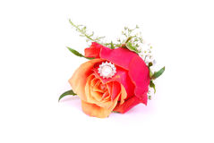 Ring inside rose. Marriage proposal concept: a luxury perl ring with diamonds inside a red and orange rose. Image isolated on white studio background Stock Photo