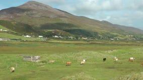 Irish landscape stock video footage
