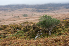 Ring of Kerry landscape Stock Photos