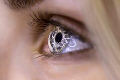 Ring light eye Royalty Free Stock Images