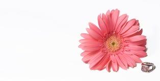 Ring mit rosafarbener Blume Stockfotografie