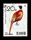 Ring-necked Pheasant (Phasianus colchicus), Ornithologist Doctor. MOSCOW, RUSSIA - NOVEMBER 24, 2017: A stamp printed in Democratic People's republic of Korea Royalty Free Stock Photography