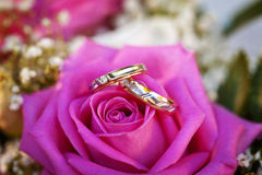 Ring on the pink rose Royalty Free Stock Photos