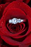 Ring in red rose petals Stock Photos