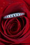 Ring in red rose petals Royalty Free Stock Image