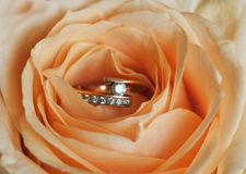 Ring in rose Royalty Free Stock Photos
