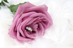Ring in Rose Royalty Free Stock Photography