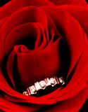Ring in rose. Diamond ring in red rose, shallow dof Stock Photo