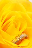 Ring in rose Royalty Free Stock Photo