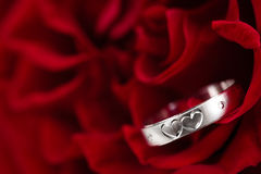 Ring and Rose. Royalty Free Stock Photo