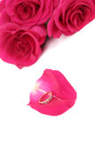 Ring on a rose-petal Royalty Free Stock Photos
