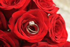Ring in Rose. Very nice detail shot of rings inside rose stock photography