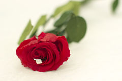 Ring and rose Royalty Free Stock Photos