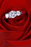 Ring in roter Rose, Nahaufnahme lizenzfreie stockfotografie