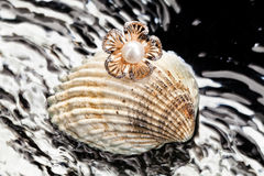 Ring And Shell Stock Images