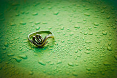 Ring snake on a wet, green, metal background. Drop of water royalty free stock image