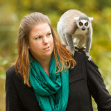 Ring-tailed lemur sitting on a womans shoulder Stock Image