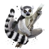 A ring-tailed lemur vector illustration
