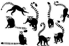 Ring-tailed lemurs collage Stock Photo