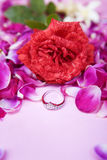 Ring to propose on valentine Stock Images