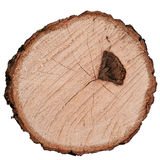 Ring Tree. Cutting of oak tree with scar from forest fire on white Stock Photography