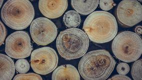 Ring Tree Timber Pile annuel image libre de droits