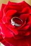 Ring und stieg Stockbilder
