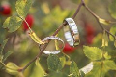 Ring wedding. Green leave ring wedding nature Royalty Free Stock Photo
