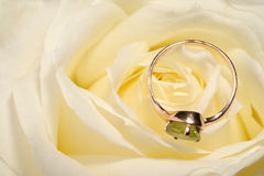 Ring in a white rose Royalty Free Stock Photo