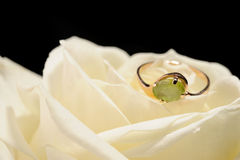Ring in a white rose Royalty Free Stock Photography