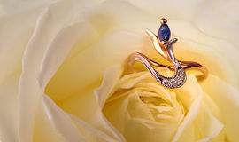 Ring in a white rose Stock Images