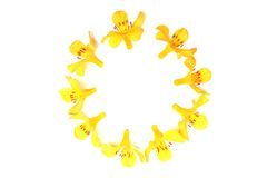 Ring of yellow flowers. On a white background Royalty Free Stock Images